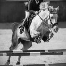 Black and white image of a white horse with flowing mane and tail, which jumps over a high barrier with a rider in the saddle.